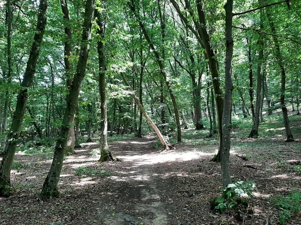 singur în pădure
