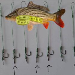 peștii umblă cu centimetrul